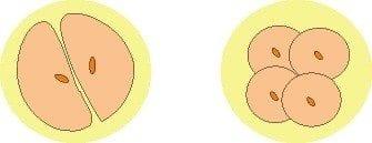 Planificación-óvulos