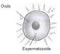 espermatozoides en cada eyaculación