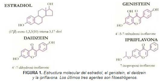 Estructura molecular del estradiol, el genistein, el daidzein y la ipriflavona