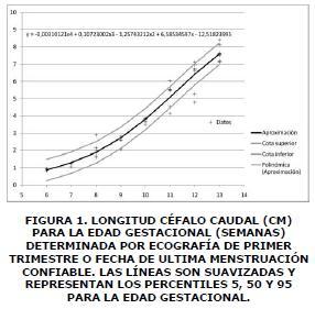Longitud cefalo caudal 1
