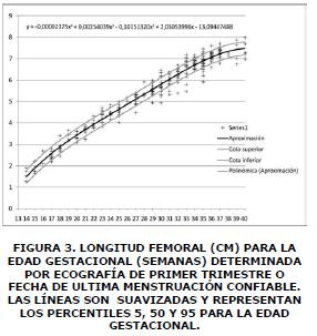 Longitud femoral