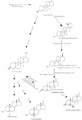 Relación T.E del metabolitos de la testosterona