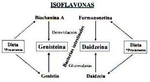 Isoflavonas